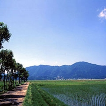 新緑の弥彦山