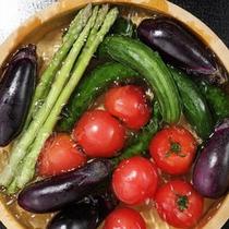 【食材】夏野菜