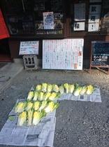 お日様に感謝★キムチの白菜は天日干し