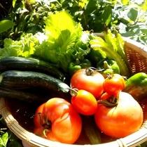 8月のお野菜 自家菜園より