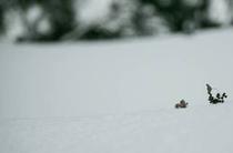 反町潤 写真7 冬枯れの雑草2