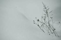 反町潤 写真2 「冬枯れの雑草3」