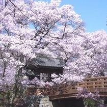 高遠城址公園(4月) 「桜雲橋(おううんきょう)」 [写真提供:伊那市観光協会]