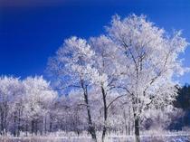冬:川霧晴れて