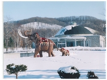 真冬の親子象