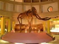 ナウマン象展示館