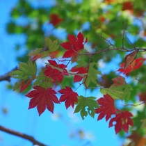 青空と紅葉p