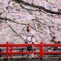 桜並木をおさんぽ♪