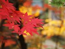 四季の移ろいが感じられる日本庭園