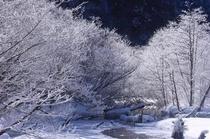 冬の上高地の霧氷