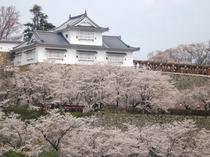 桜咲く 備中櫓 お部屋からの眺望