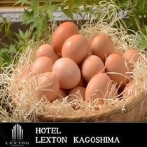 新鮮な生卵で卵ご飯