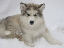 愛犬ひびき#1