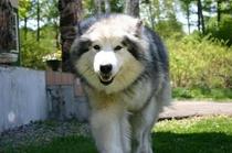 愛犬ひびき#2