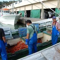 「鮮度が命の香住カニ!」 香住のカニ船は「日帰り漁」だから、「鮮度が良く、美味しいのです」