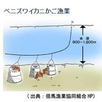 「松葉ガニ」より深水に生息する「香住カニ」は、「カニかご漁」という特殊な漁法で捕獲されます。