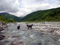 松川で川遊び