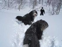雪の散歩2