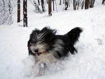 雪の散歩3