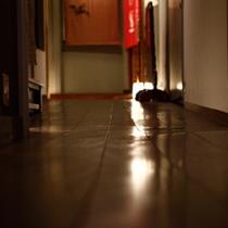 廊下 板の目