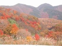 蒜山・鬼女台からの紅葉風景