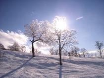 天然雪100%パウダー