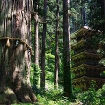 *羽黒山神社/巨杉の老木と五重塔が神秘的。当館よりお車で約45分