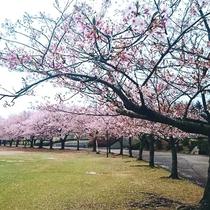 ◆加賀市中央公園