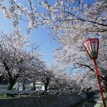 ◆熊坂川の桜並木