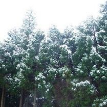 雪の杉山プラン