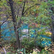 *抱返り渓谷/両岸の原生林と岸壁にかかる滝や独特の青い渓流がとても美しく、新緑と紅葉の名所です。