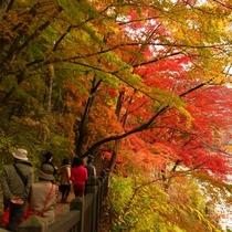 塩原温泉を流れる箒川沿いの紅葉