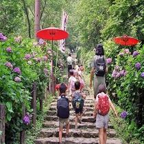 芭蕉の里黒羽城址公園紫陽花祭り