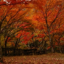 塩原温泉郷付近の紅葉