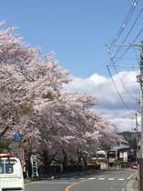桜 厳美街道