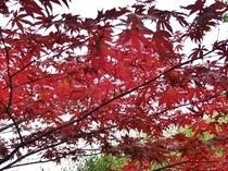 熱海梅園【紅葉】