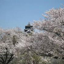 熊本城 桜のシーズン3