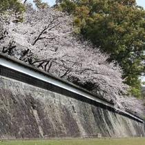 熊本城 桜のシーズン4