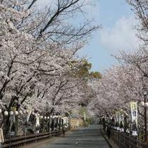熊本城 桜のシーズン2
