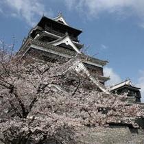 熊本城 桜のシーズン1