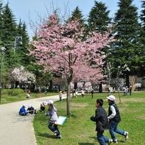 ホテルより徒歩2分の錦町公園春の風景