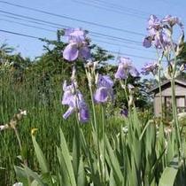 当館すぐ横の花畑で育てたお花を館内に飾っています。