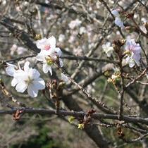 *桜山公園