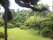こじんまりとした庭。