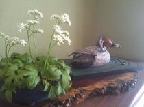 白い花と鴨