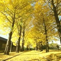 水戸市 歴史館 銀杏並木