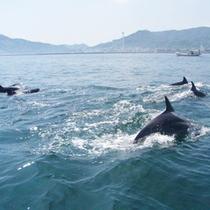 【イルカウォッチング】漁船に乗ってイルカの住む海へ。港まで車で30分