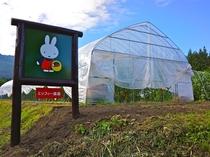 ミッフィー農園収穫体験