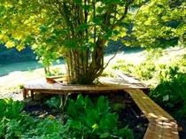 散策用の木道