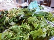 近くで採れた新鮮な山菜
